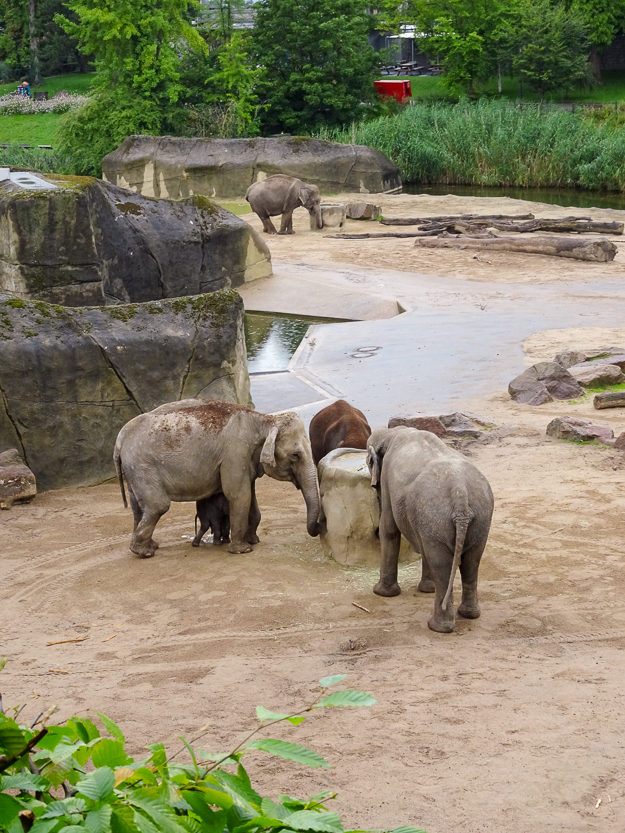 Visiting Cologne Zoological Garden, Germany