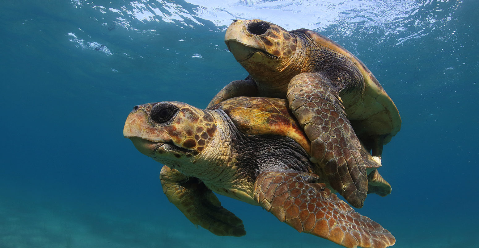 Help to Save the Sea Turtles in Costa Rica: Be a Volunteer