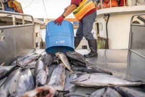 Catch Honolulu Fish Auction