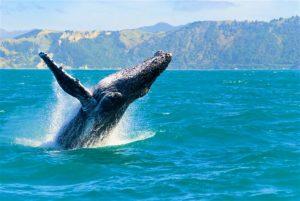 Watch humpback whales in Honolulu