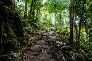 Hiking trails in El Yunque