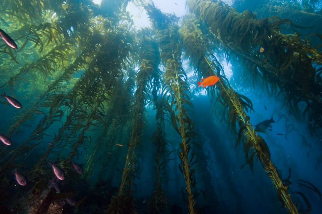 Santa Cruz Island Snorkeling