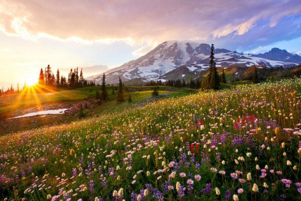 Hike or Visit Mount Rainier National Park in Seattle