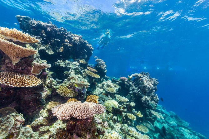 Sail and snorkeling in Great Barrier Reef Summer Bucket list