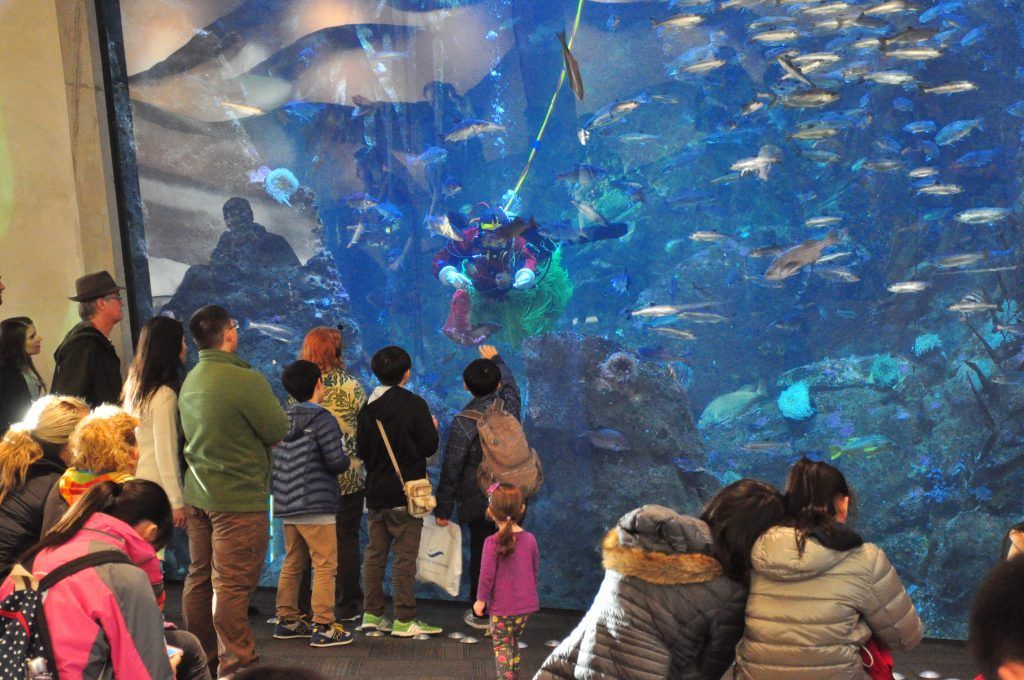 Visit the Seattle Aquarium Best things to do in Seattle