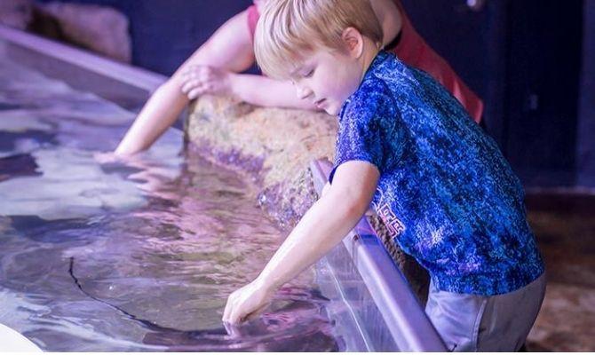 Austin Aquarium TX