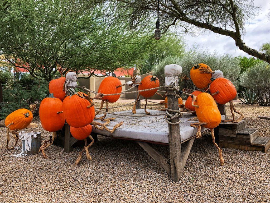 Pumpkin Walk in Arizona