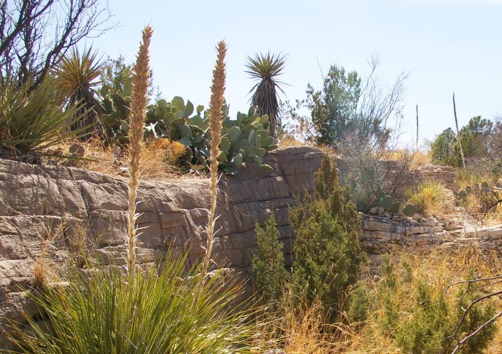 Living Desert State Park NM