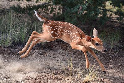 Wildlife West Nature Park NM