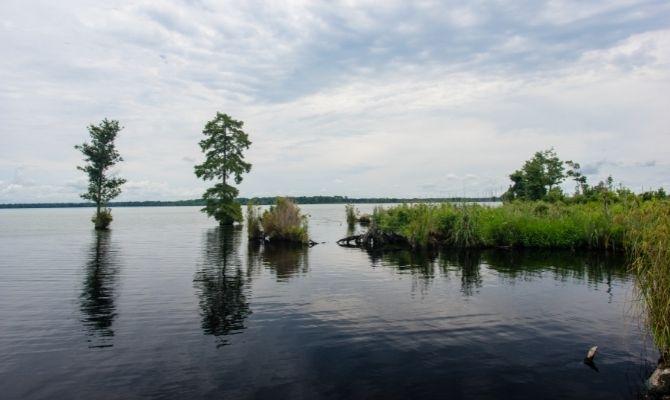 Great Dismal Swamp National Wildlife Refuge, Suffolk