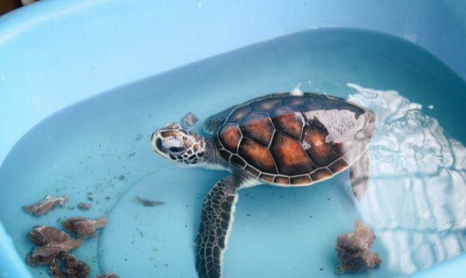 Sea Turtle Camp, Wilmington
