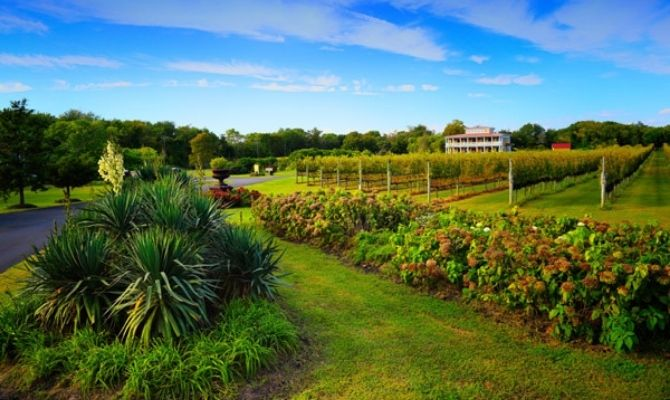 Things to Do in Cape May Willow Creek Winery
