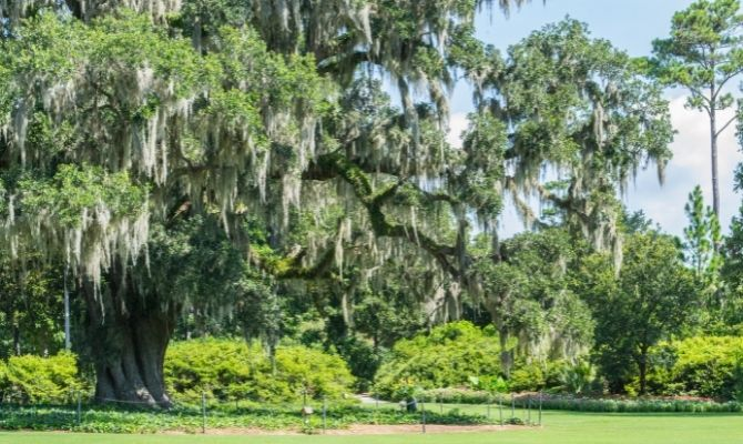 Things to Do in Wilmington NC Airlie Garden