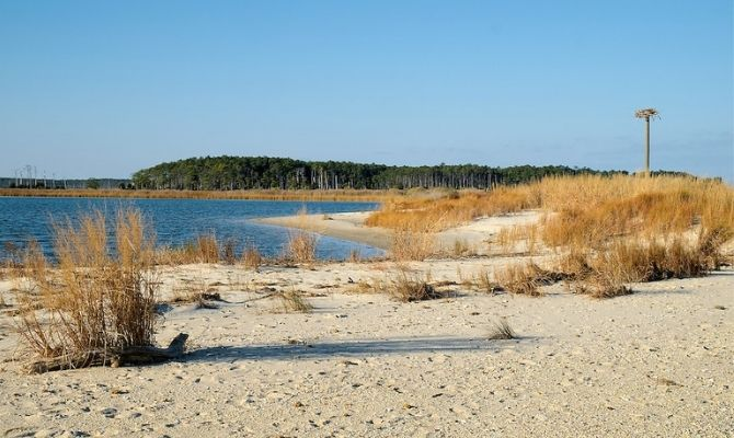 Bethel Beach Natural Area Preserve, Mathews County