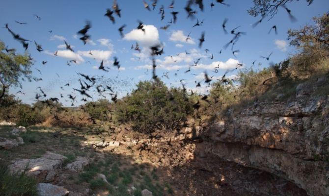 Caverns in Texas Bracken Cave Preserve