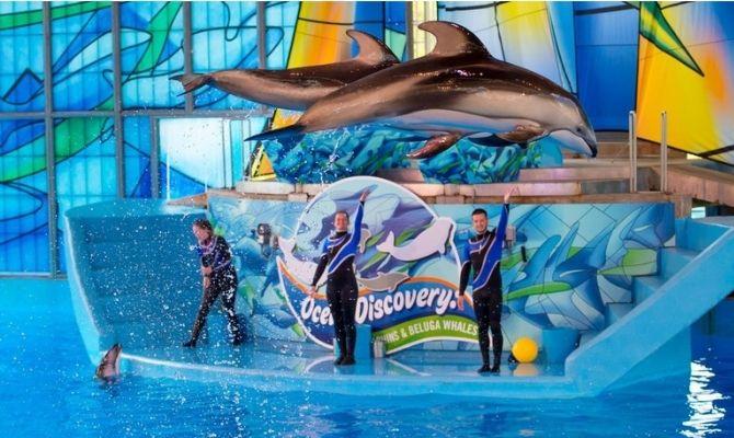 Things to Do in San Antonio SeaWorld San Antonio